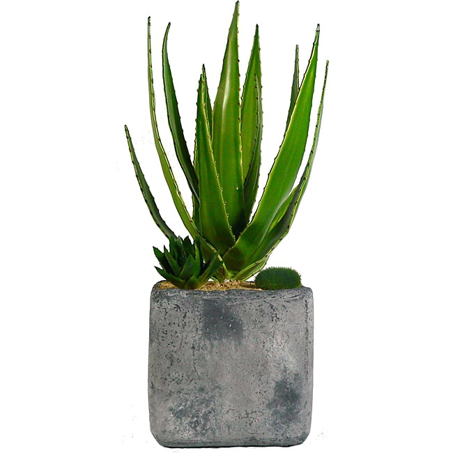 Laura Ashley Aloe Succulents in Clay Container