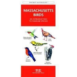 Massachusetts Birds Book