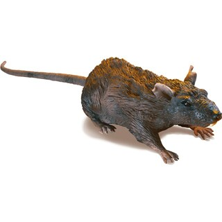 R / C Rat