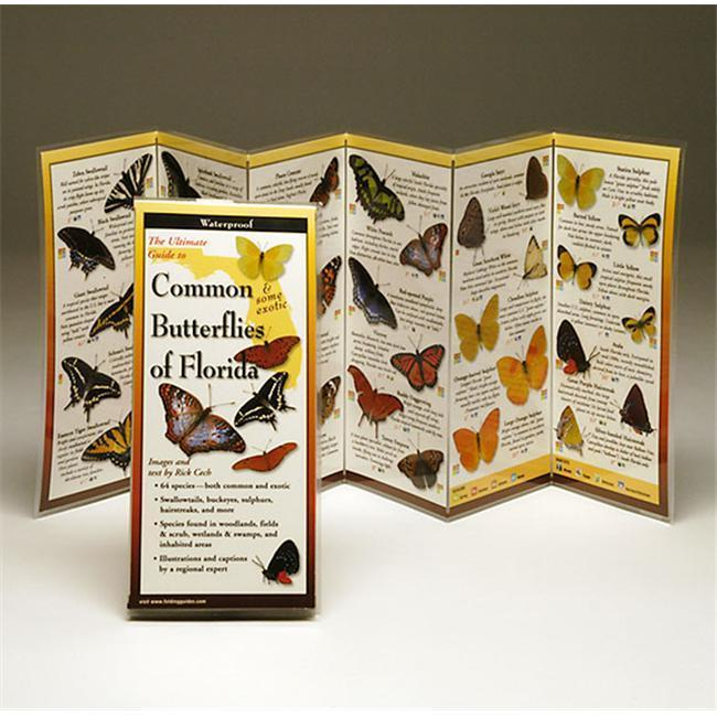 Common Butterflies Florida Book