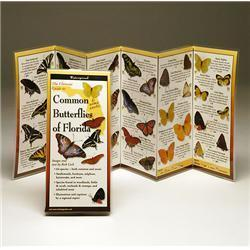 Common Butterflies Florida Book
