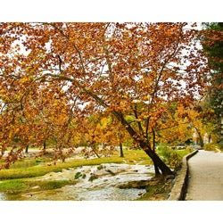 "Stewart Parr ""Turner Falls, Oklahoma - Fall trees"" Unframed Photo Print"