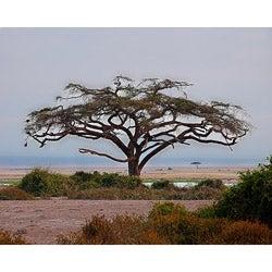Stewart Parr 'Kenya - Acacia Tree' Unframed Landscape Photo Print