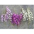 Dendrobium Orchids (Pack of 100)