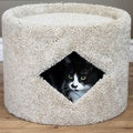 New Cat Condos Cat Cave