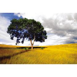 Nathan Lovas 'Lone Tree Sunset' Gallery-wrapped Canvas Art