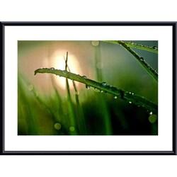 John K. Nakata 'Morning Dew' Metal Framed Art Print