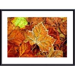 John K. Nakata 'Frost on Leaf' Metal Framed Art Print