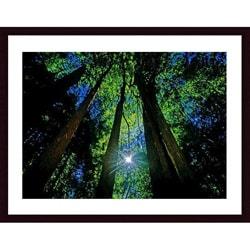 John K. Nakata 'Forest Canopy' Wood Framed Art Print