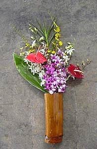 Dendrobium/Oncidium/Anthurium Assortment (12 pcs)