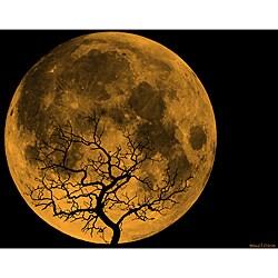 Maxwell Dickson Orange Moon Canvas Wall Art