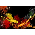 Maxwell Dickson 'Koi Fish' Canvas Wall Art