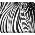 Gallery Direct Zebra Oversized Gallery Wrapped Canvas