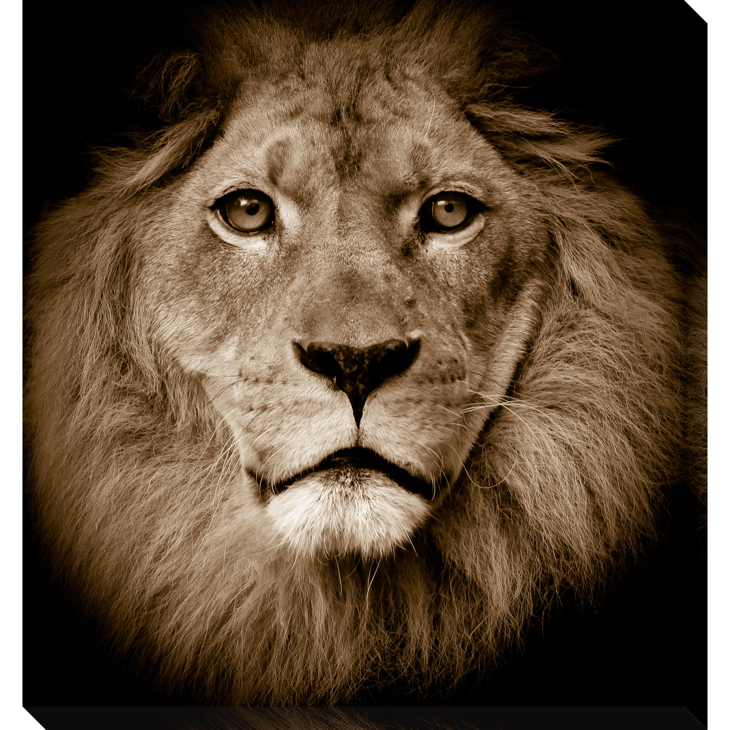 Gallery Direct Lion Oversized Gallery Wrapped Canvas