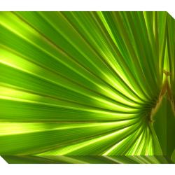 Palm Oversized Gallery Wrapped Canvas