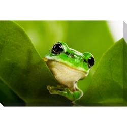 Frog Oversized Gallery Wrapped Canvas