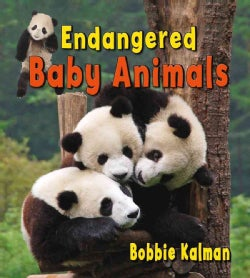 Endangered Baby Animals (Hardcover)
