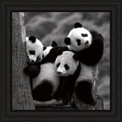 Delimont 'Pandas' Framed Print