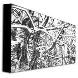 Kathie McCurdy 'Winter Tree' Canvas Art