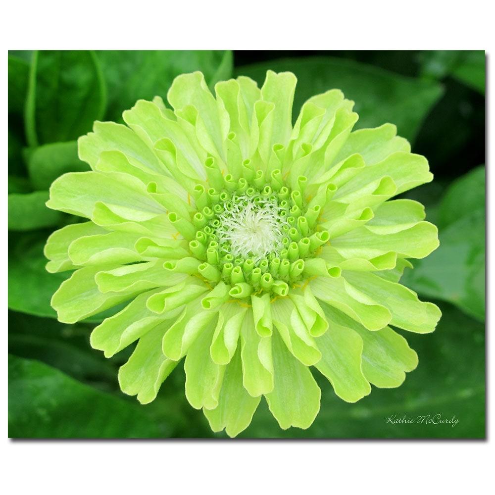 Kathie McCurdy 'Green Envy Zinnia' Floral Canvas Art
