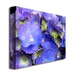 Kathie McCurdy 'Hydrangea' Canvas Art