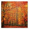 Small Philippe Sainte-Laudy 'Red November' Canvas Art