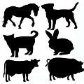 Instant Chalkboard Farm Animal Combo Sticker