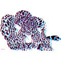 Maxwell Dickson 'Moving Spots' Canvas Art