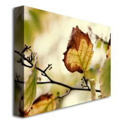 Contemporary Ariane Moshayedi 'Leaves' Canvas Art