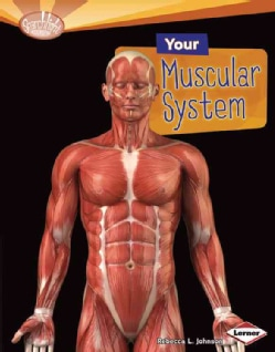 Your Muscular System (Hardcover)