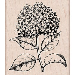 Hero Arts Mounted Rubber Stamps-Hydrangea
