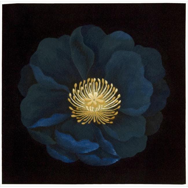 Nourison Hand Tufted Black Flower Art Wool Rug (3' x 3')