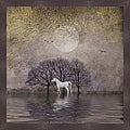 Dawne Polis 'White Horse in Pond' Framed Print