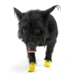 Pawz XXS Extra Extra-small Yellow Dog Booties (Pack of 12)
