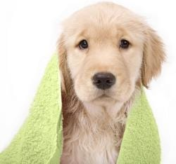Smart Dry 'Quick Drying' Pet Towel Set