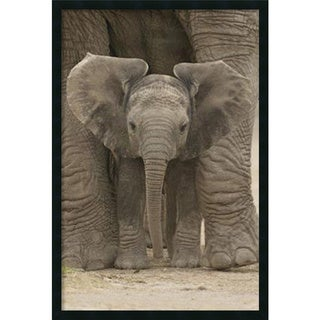 Big Ears - Baby Elephant' Framed Art Print with Gel Coated Finish