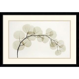 Albert Koetsier 'Eucalyptus II' Framed Art Print