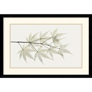 Albert Koetsier 'Japanese Maple' Framed Art Print
