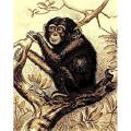 African Adventure Chimpanzee on Tree Area Rug (5' x 7')