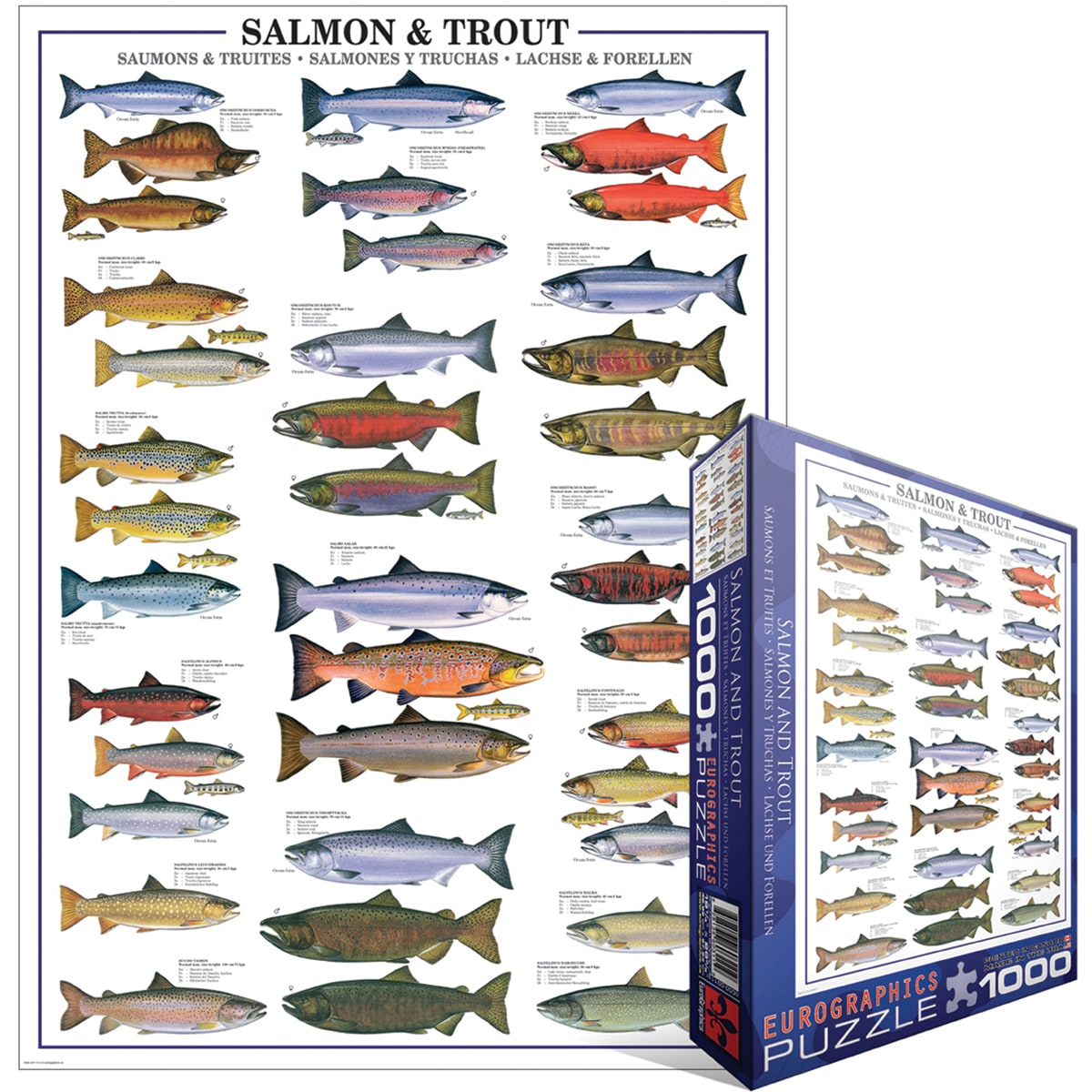 Jigsaw Puzzle 1000 Pieces -Salmon And Trout