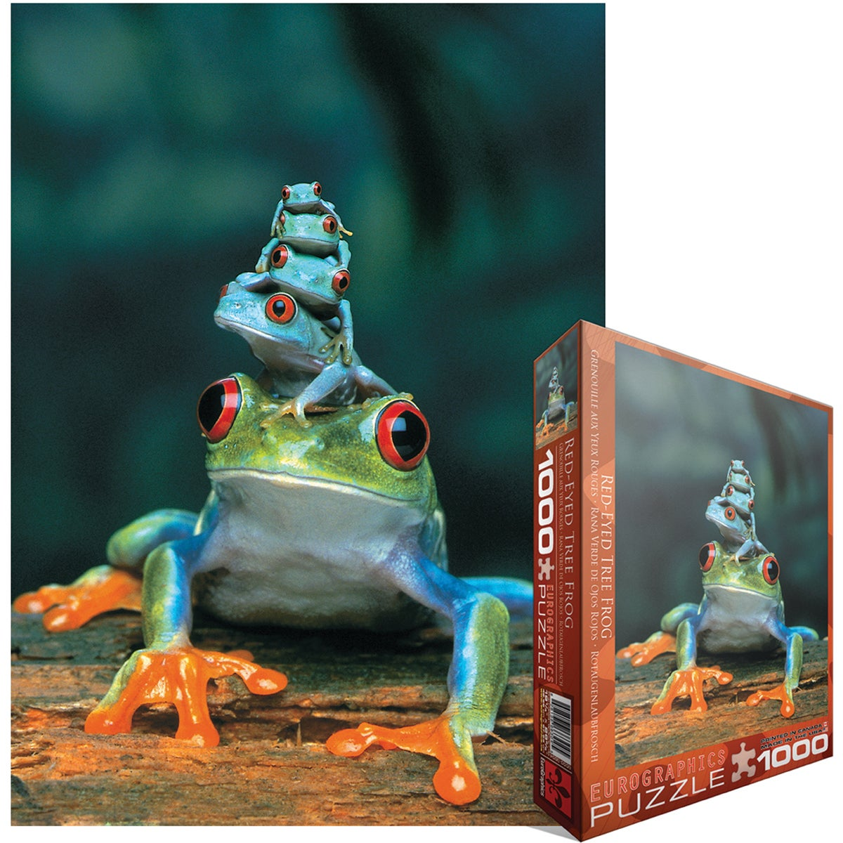 Jigsaw Puzzle 1000 Pieces -Red-Eyed Tree Frog