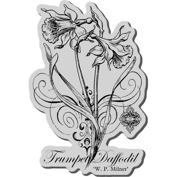 Stampendous Cling Rubber Stamp-Botanical Daffodil