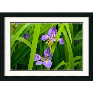 Andy Magee 'Purple Iris' Framed Wall Art Print