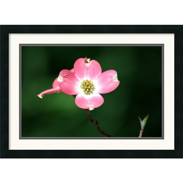 Andy Magee 'Pink Dogwood Blossom' Framed Art Print
