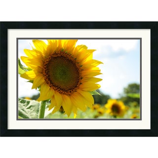 Andy Magee 'Sunflowers' Small Framed Art Print