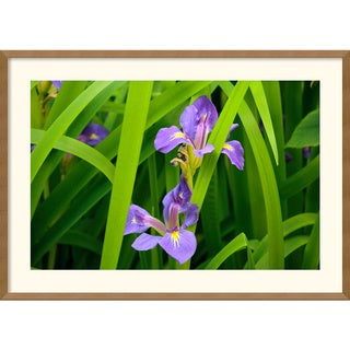 Andy Magee 'Purple Iris' Framed Art Print