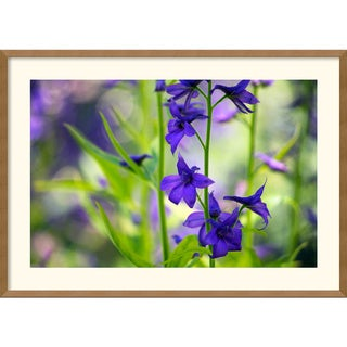 Andy Magee 'Larkspur' Framed Art Print