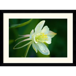 Medium-Size Andy Magee 'White Columbine' Framed Art Print