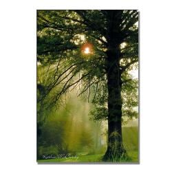 Kathie McCurdy 'Magical Tree' Canvas Art