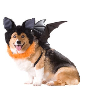 Animal Planet 'Bat' Dog Halloween Costume